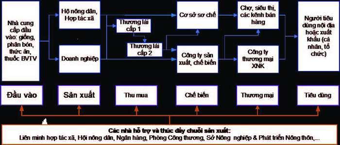 Chuỗi cung ứng sản xuất nông nghiệp Việt Nam - Ảnh 4.