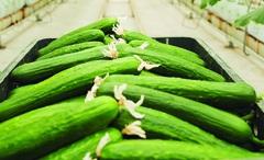 Chuỗi cung ứng sản xuất nông nghiệp Việt Nam
