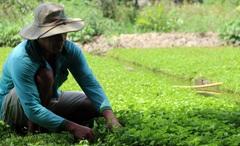 Kiên Giang: Thực hiện tốt chính sách dân tộc, tuyên truyền người dân chung tay xóa đói giảm nghèo