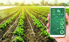 IoT & bức tranh toàn cảnh nông nghiệp toàn cầu