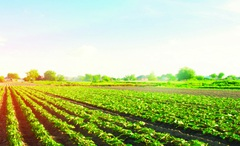 Nông nghiệp chính xác bức họa xanh tươi của tương lai