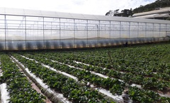 Thúc đẩy phát triển các vùng sản xuất nông sản thực phẩm an toàn