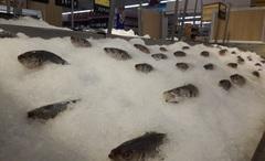 Thanh tra việc chấp hành ATTP nông lâm thủy sản: Xử phạt Công ty Linh Phát 8,5 triệu đồng